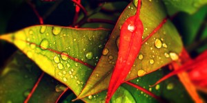 water drops leaves fb covers