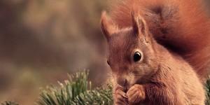 squirrel vintage cover photos