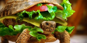 cheeseburger turtle