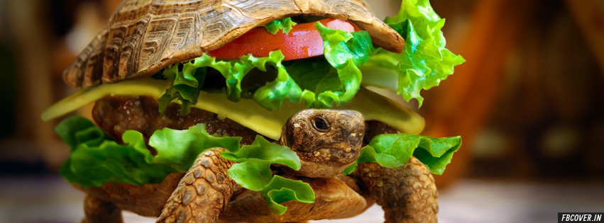cheeseburger turtle