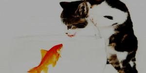 kitten vs fish fb covers