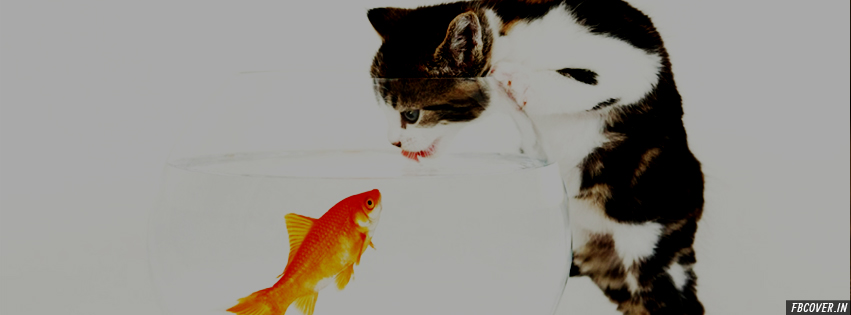 kitten vs fish fb covers
