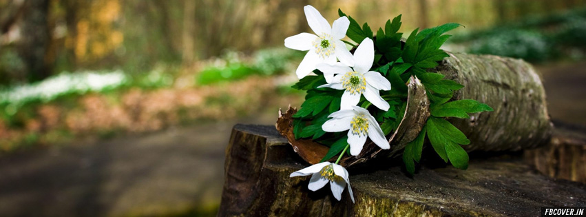 spring flowers facebook covers