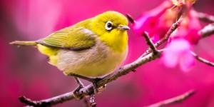 spring birds facebook covers