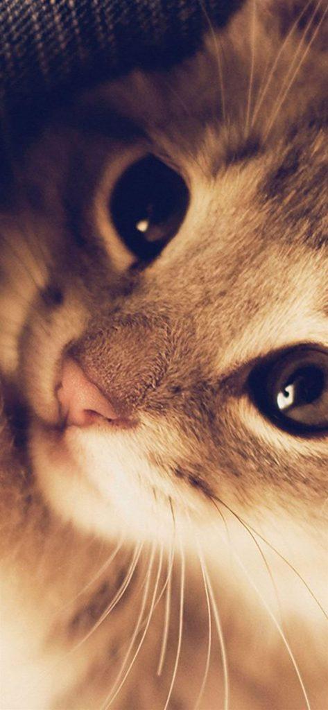 Cute Cat Kitten Nature Animal Warm Macro cat iphone wallpaper