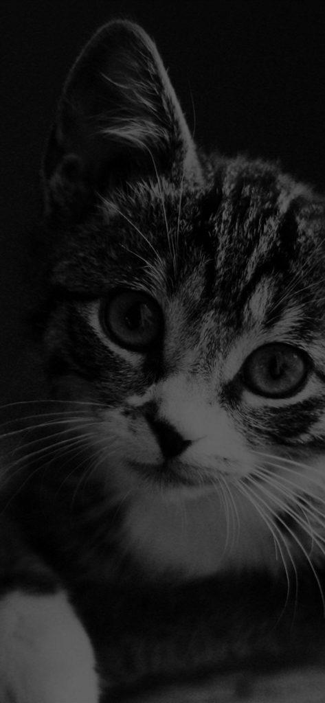 Cute Cat Look Dark Bw Animal Love Nature cat iphone wallpaper