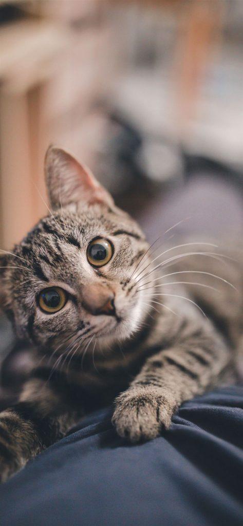 Cute kitty cat iphone wallpaper
